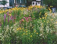 Prairie Garden, Garden Park