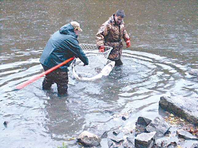 Sturgeon were native to both the Milwaukee River and Lake Michigan. The DNR has been stocking fingerlings and some adult sturgeon for several years now. This adult sturgeon, which can reach 5 ft. in length, was released in October of 2005 in Kern Park.