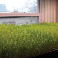 wheatgrass2HyperlinkSlideshow
