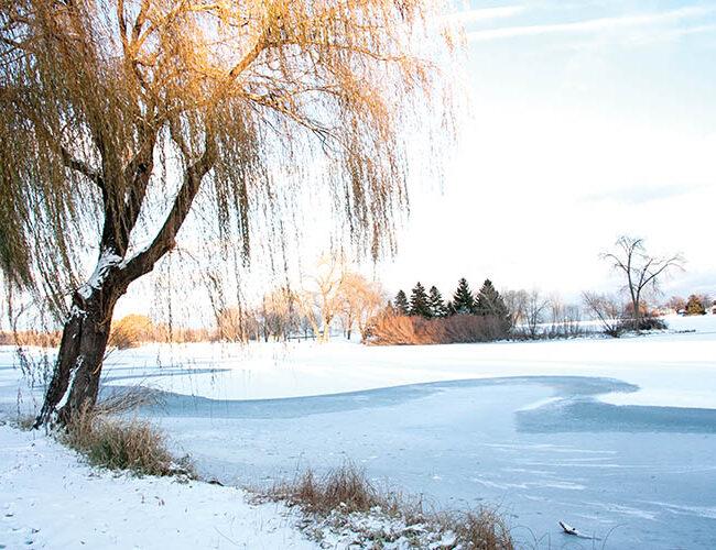 Winter Scene Cover Alice Waraxa web