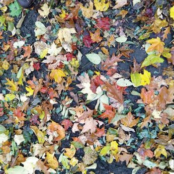 FOREST FLOOR OCT 28 2018 VB web